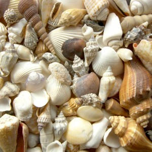 Feng Shui and Sea Shells by Donna Stellhorn