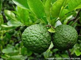 Feng Shui Cleansing with Kaffir Lime