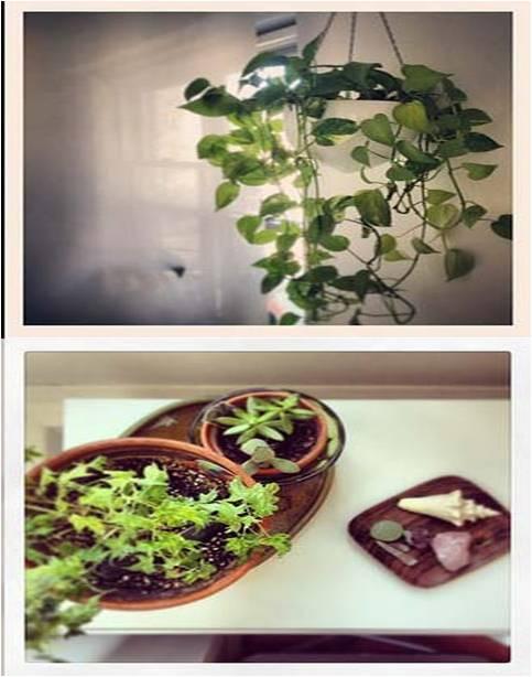 Refresh Your Indoor Plants