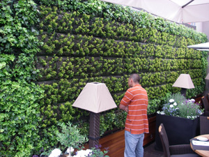 plants for windowless office. maureen calamia - what\u0027s up with green walls plants for windowless office a